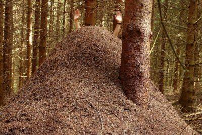 Ein Hügel von Ameisen im Wald