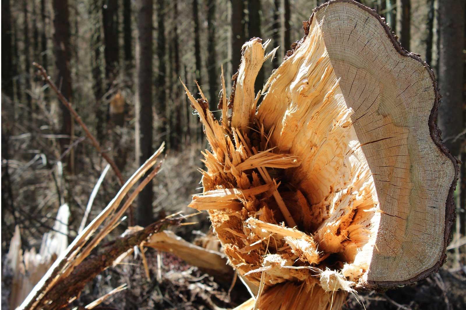 ein großer Baumbruch