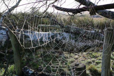 dickes Spinnennetz im Wald