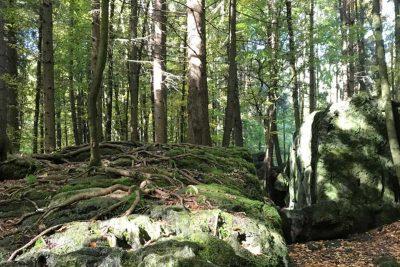 Waldsteine und Wurzel